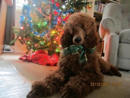 cayenne_Christmas2011