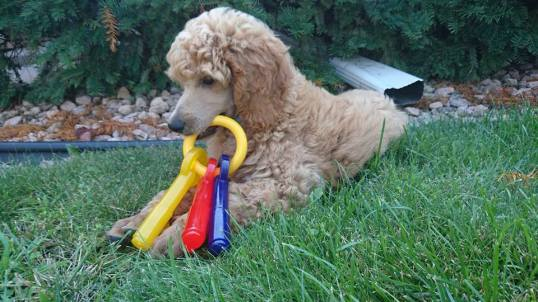 One of his first toys in his new yard.