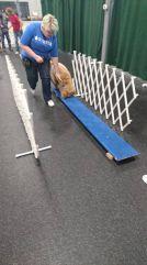 Puppy agility!