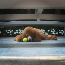 jagger_Sweetboywithhisball