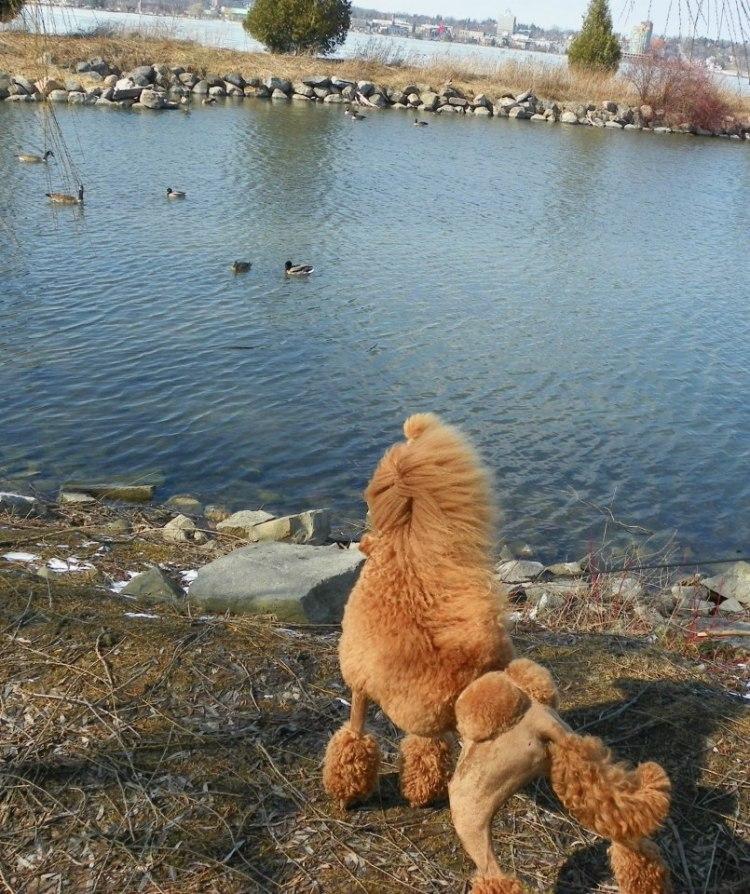 journey_Convincedsheisabirddog