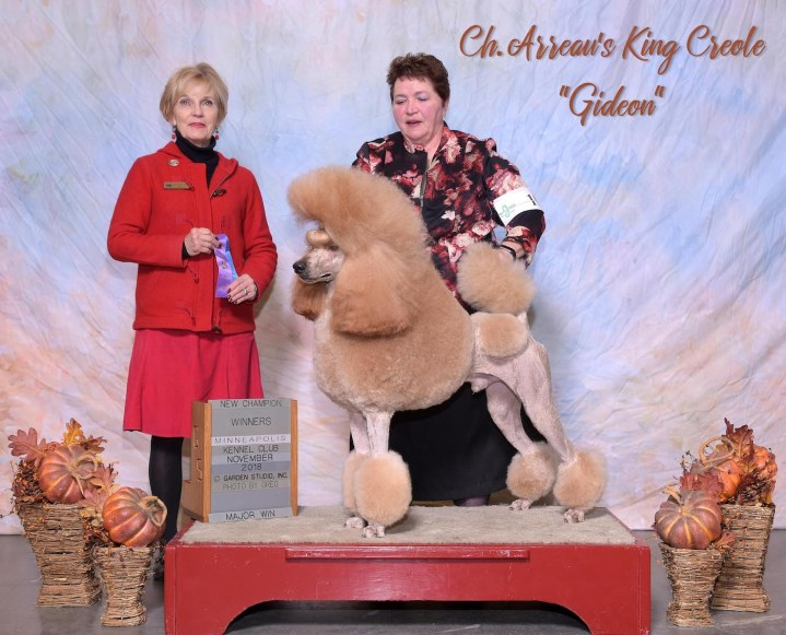 Gideon's final win, a 4 point major, making him an AKC champion! Presented expertly by Terri Meyers.